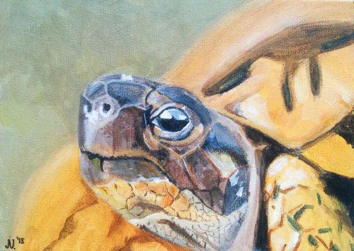 Dierenportret van een griekse landschildpad, schilderij door Jonne Nabuurs, acrylverf op canvasboard, 13 bij 18 centimeter