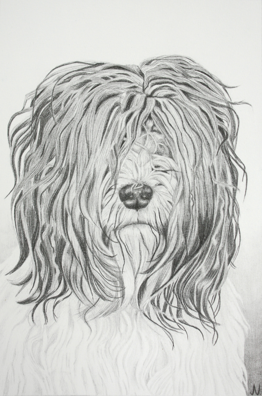 Dierenportret van Bente, tekening door Jonne Nabuurs, grafietpotlood op papier, formaat A3