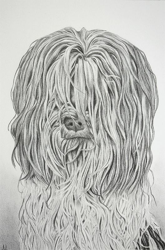 Dierenportret van Saartje, tekening door Jonne Nabuurs, grafietpotlood op papier, format A3